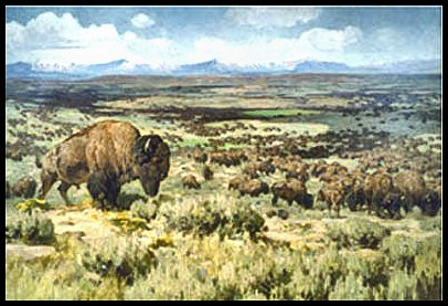 "[Painting: Millions of American Bison - ""buffalo"" - roamed the plains of the midwest.]"